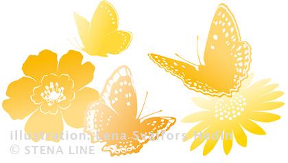 Fjärilar och blommor tecknade till Stena Line sommaren 2013