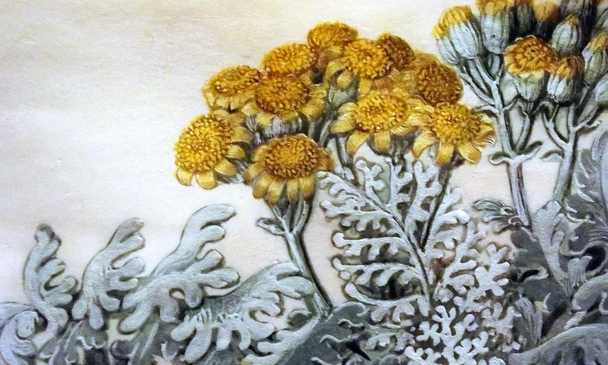 botanisk illustration från Gottorfer Codex utställt i Köpenhamn