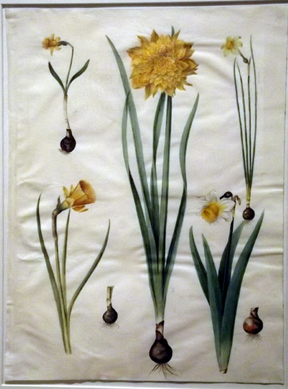 Flower painting from the Gottorfer Codex