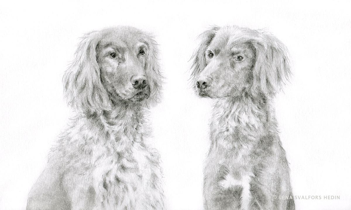 Hundteckning porträtt i blyerts