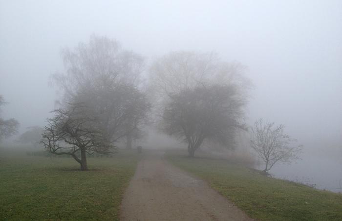 Dimma mellan träden