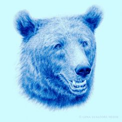Brown bear animal pen drawing blue colour