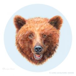 Animal drawing of a brown bear with round background colour pencils and gouache