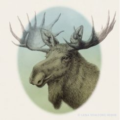 Animal pencil drawing portrait of a swedish elk moose with green background
