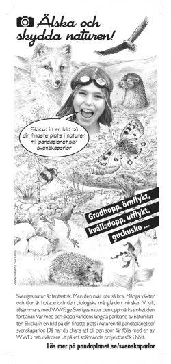Teckning av Lena Svalfors Hedin till Arlas mjölkpaket-baksidor sommaren 2014