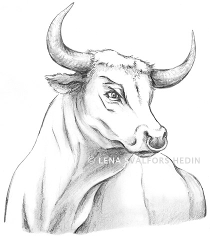 Drawing for a tattoo of a bull