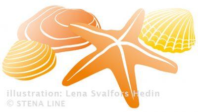 Snäckskal och sjöstjärna tecknade till Stena Line