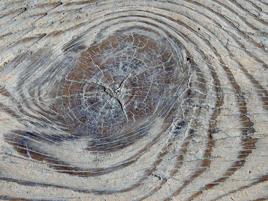 textures wood trä