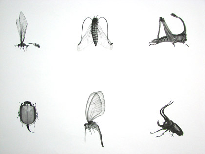 abc insect poster by Martin Lannering