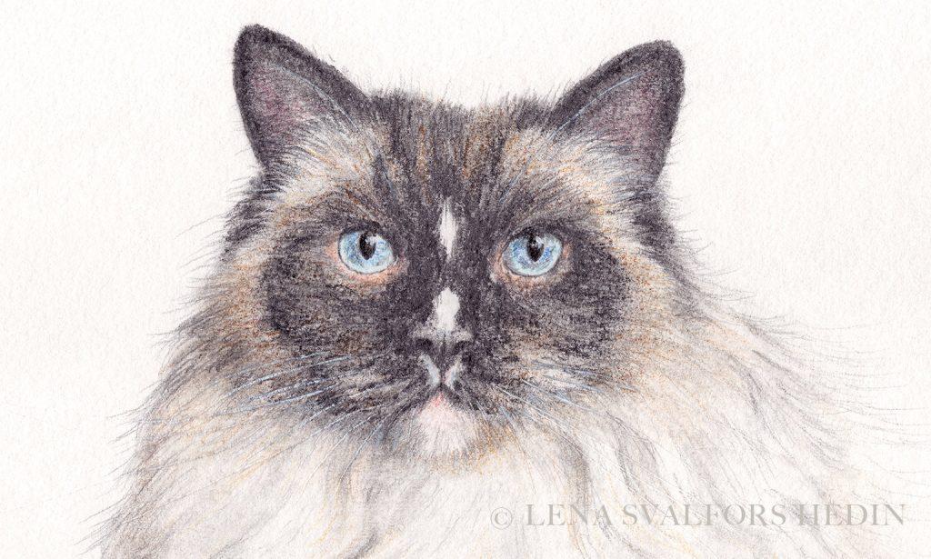 Detalj av katt-teckning