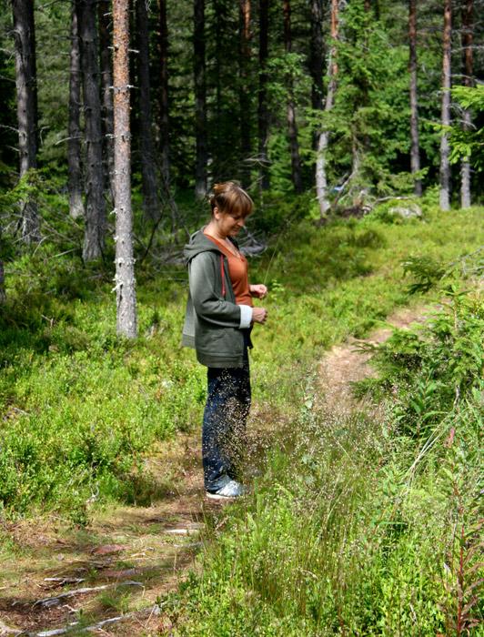 Alvdalen woods