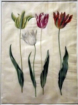 Gottorfer Codex painted tulips flowers