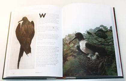 fågelmålare 100 wege einen vogel