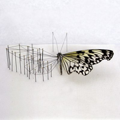 Anne ten Donkelaar - vlinderkast