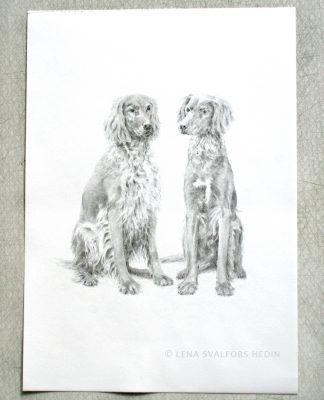 Porträtt hundar blyertsteckning
