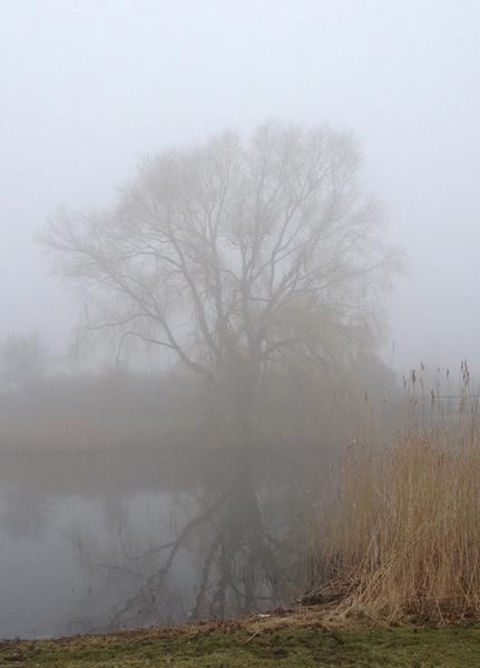 Ribersborgsstranden vinterdimma i Malmö
