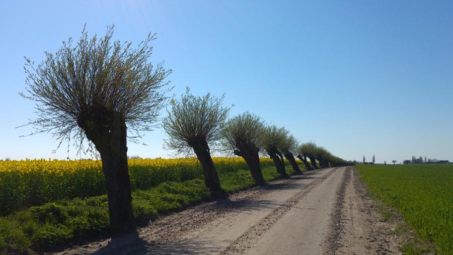 Pilträd i Skåne