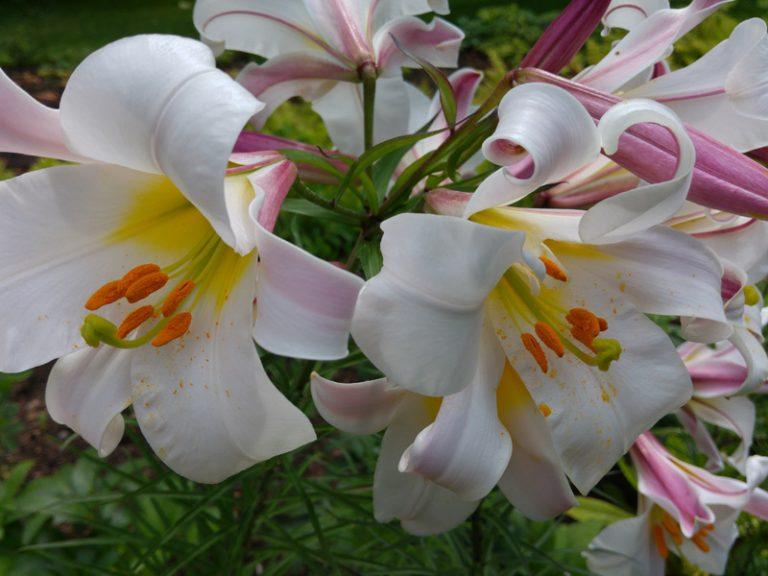 Vackra blommor i kungliga Kew garden