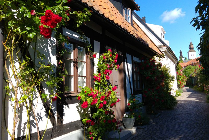 Rose in full bloom outside a little house in Visby, Gotland