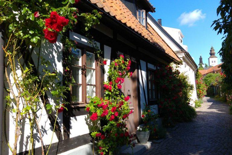 Rosorna blommar i Visbys gränder