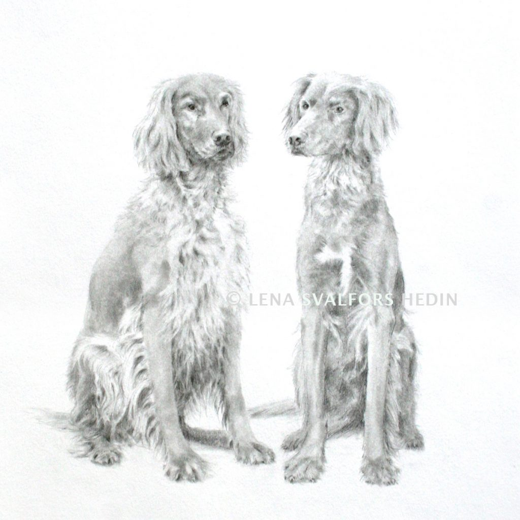 Blyertsteckning av två hundar
