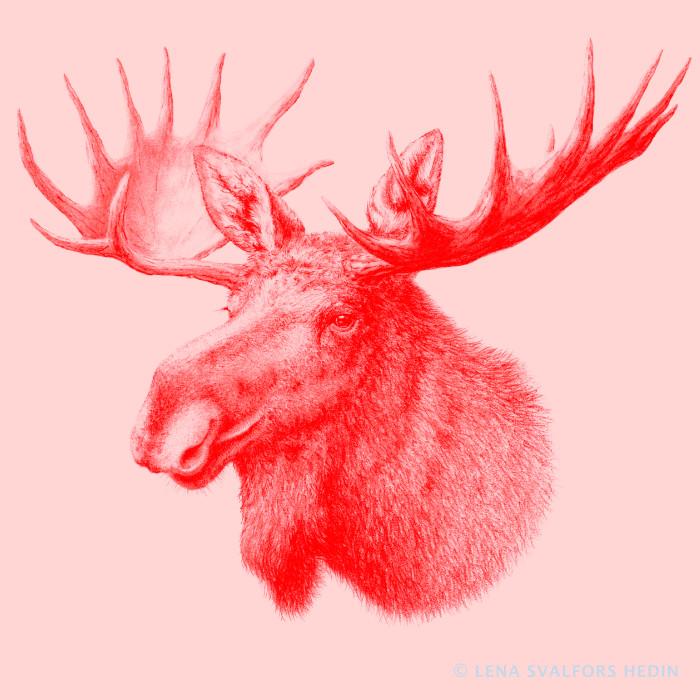 Blyertsteckning av älghuvud med horn tonad i rött och rosa