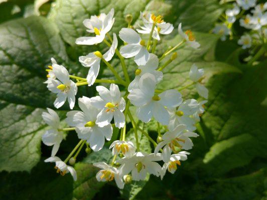 Vacker blomning