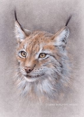 Lodjurets hemlighet teckning djurporträtt