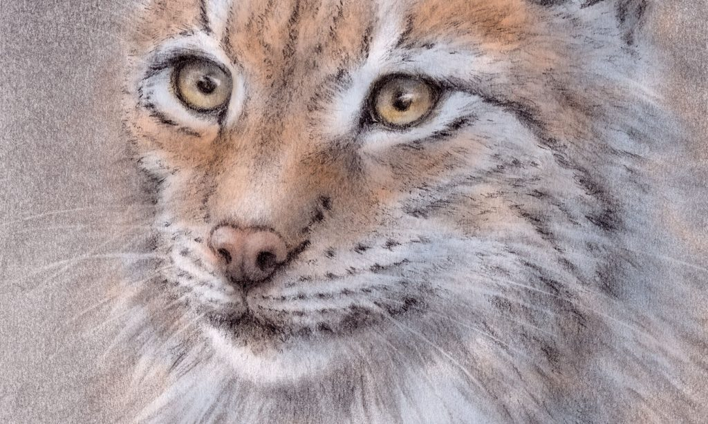 Detail of my lynx cat drawing
