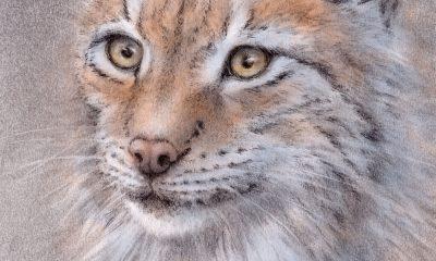 Drawing of a scandinavian Lynx cat