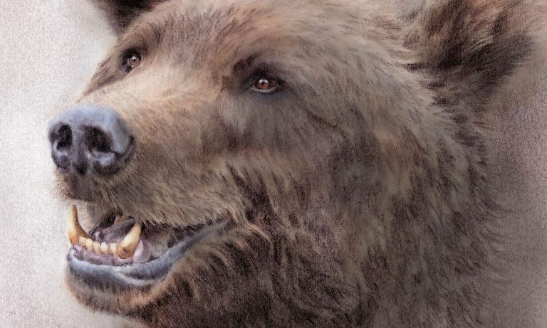 Tecknat porträtt av en svensk björn