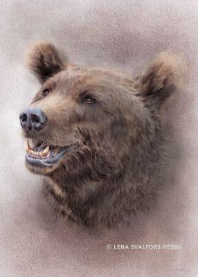 Porträtt av en björn, tecknad i blyerts