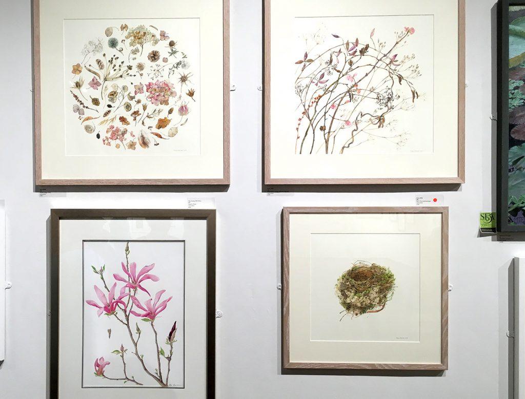Helen Millar botanical artist
