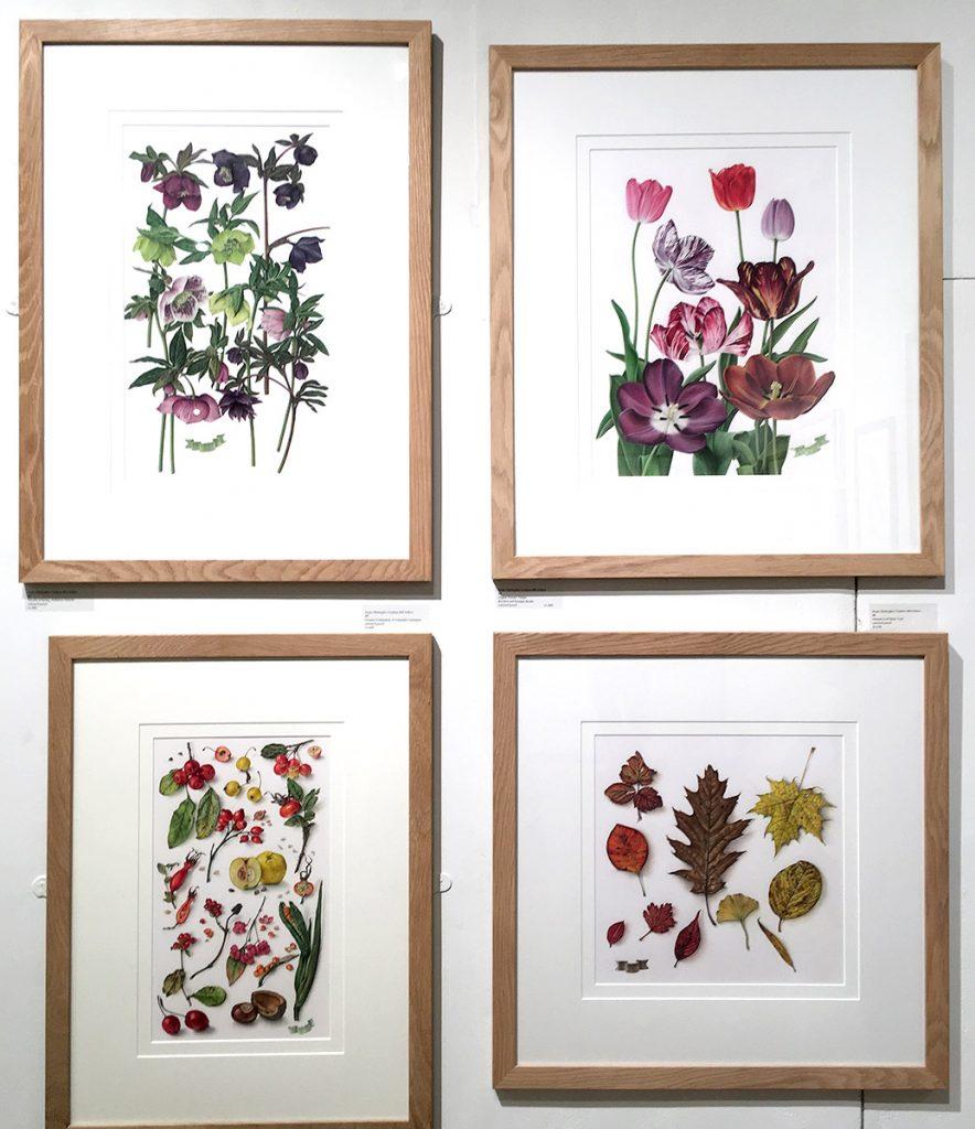 Susan Christopher-Coulson botanical artist