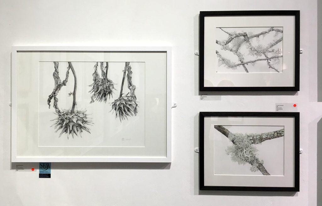Botaniska teckningar av Maryna Kyselyova och Yvonne Gemmel