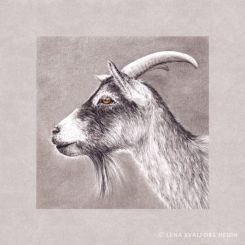 Graphite pencil drawing of a goat grey background