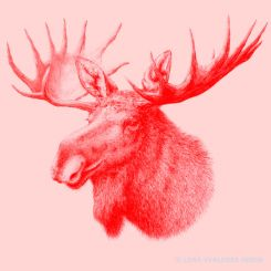 Graphite animal drawing of a moose elk in red and pink