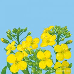 Yellow summer flower plant vector drawing in Illustrator
