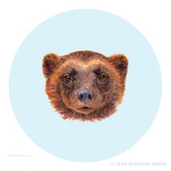 Wolverine animal color pencil drawing with gouache and round background